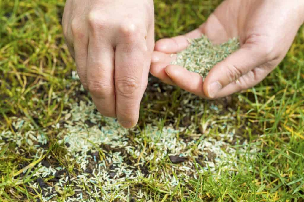 Can I Put Grass Seed On Top Of Grass?