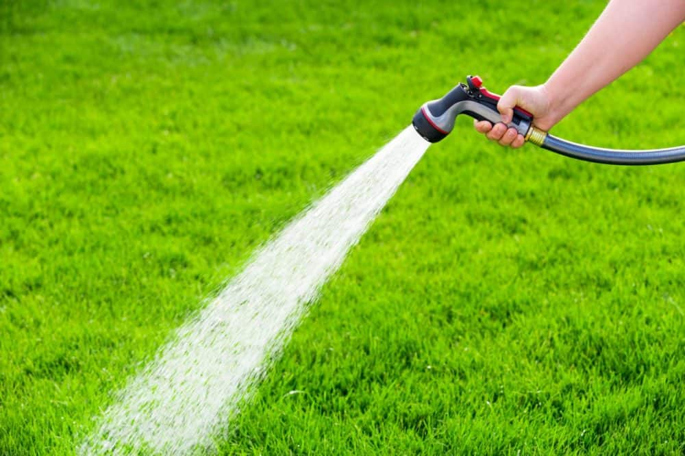 Can You Over Water Grass?