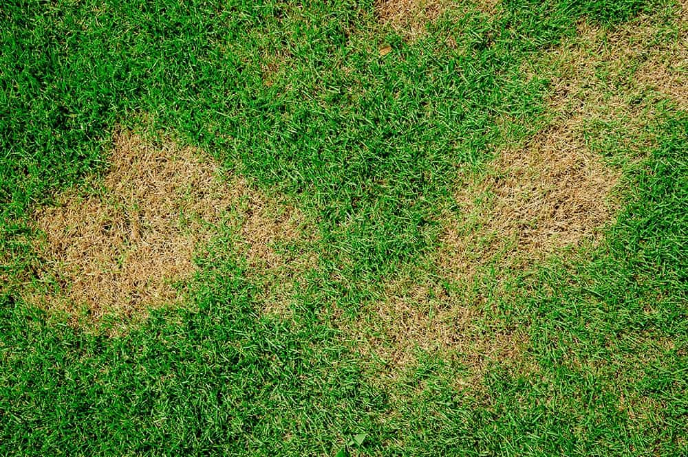 What Causes Brown Patches On The Lawn