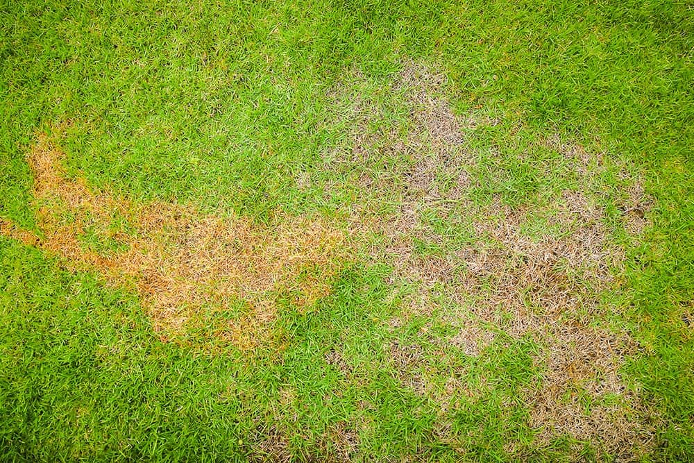 What Does Diseased Grass Look Like?