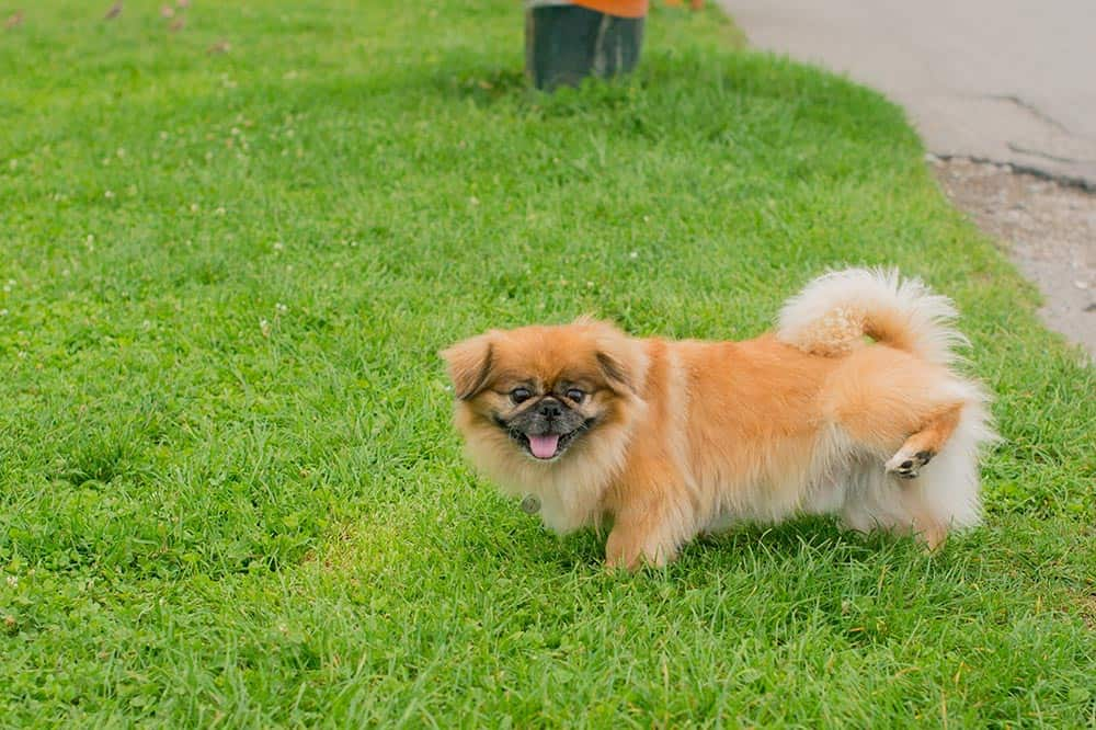 what neutralizes dog pee on grass